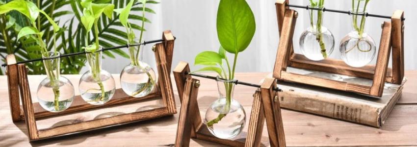 Nos vase hydroponiques, tendance décoration